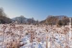 Ardenne - l'hiver - la neige (10).jpg