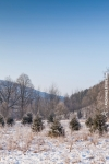 Ardenne - l'hiver - la neige (9).jpg