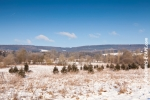 Ardenne - l'hiver - la neige (8).jpg