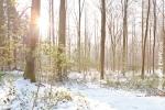 Ardenne - l'hiver - la neige (4).jpg