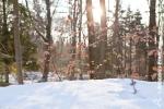 Ardenne - l'hiver - la neige (2).jpg