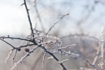 Ardenne - l'hiver - la neige (19).jpg