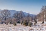 Ardenne - l'hiver - la neige (13).jpg