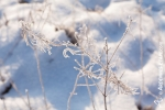 Ardenne - l'hiver - la neige (11).jpg