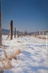 Ardenne - l'hiver - la neige (25).jpg
