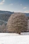 Ardenne - l'hiver - la neige (23).jpg